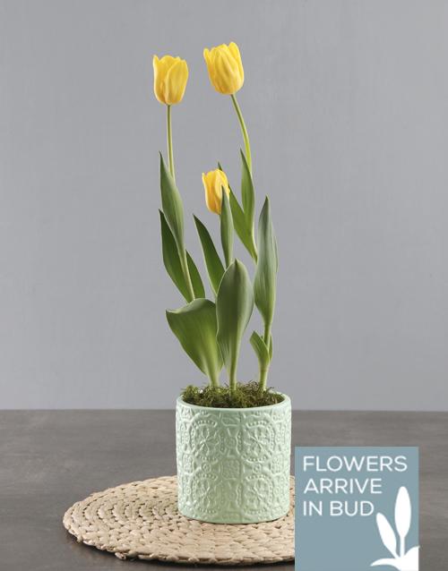 tulips: Yellow Tulips in Aqua Pot!