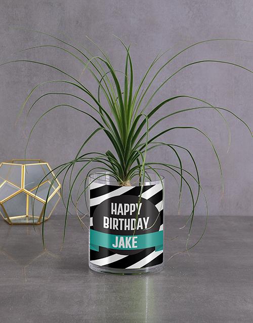 plants: Personalised Birthday Pony Tail Palm!