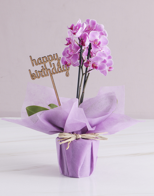 flowers: Pink Midi Birthday Orchid In Wrapping!