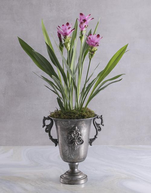 colour: Purple Curcuma in Silver Chalice!