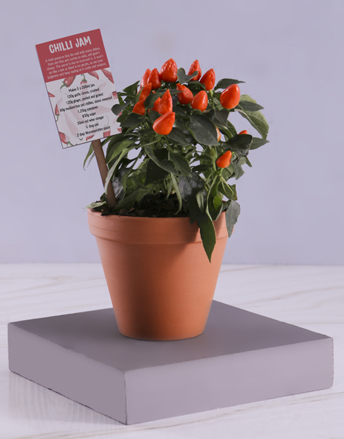 flowers: Red Chilli Plant with Recipe!
