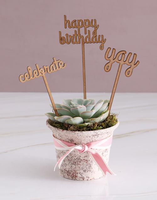birthday: Birthday Celebration Succulent!