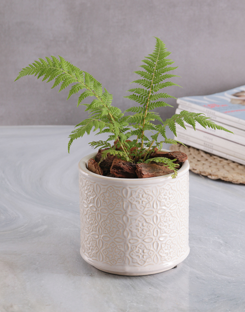plants: Fern in Glazed Cream Pot!