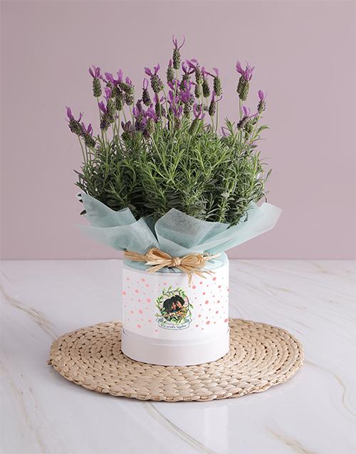 personalised: Wrinkle Together Lavender Photo Vase!