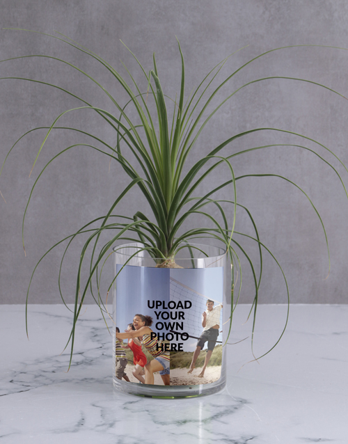 secretarys-day: Personalised Ponytail Palm in Vase!