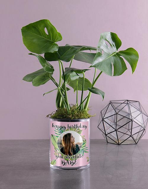 plants: Personalised Birthday Monster Leaf!