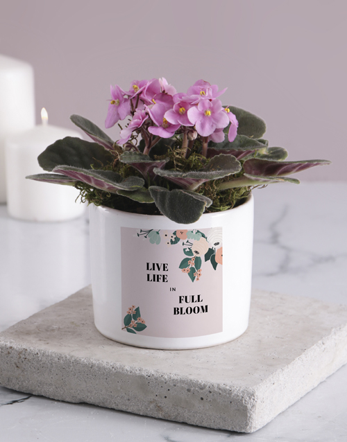 colour: Life In Full Bloom African Violet!