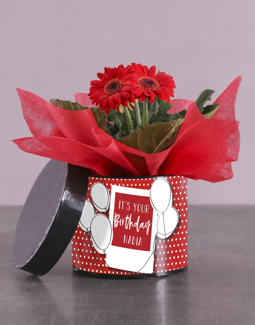 personalised: Birthday Gerbera Plant Gift In Hatbox!