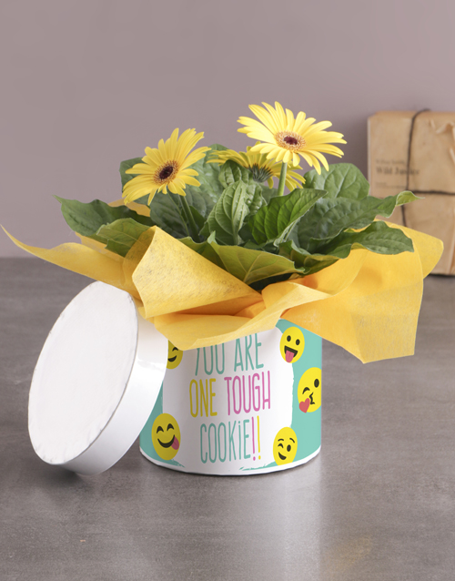 get-well: Tough Cookie Gerbera Plant Gift In Hatbox!