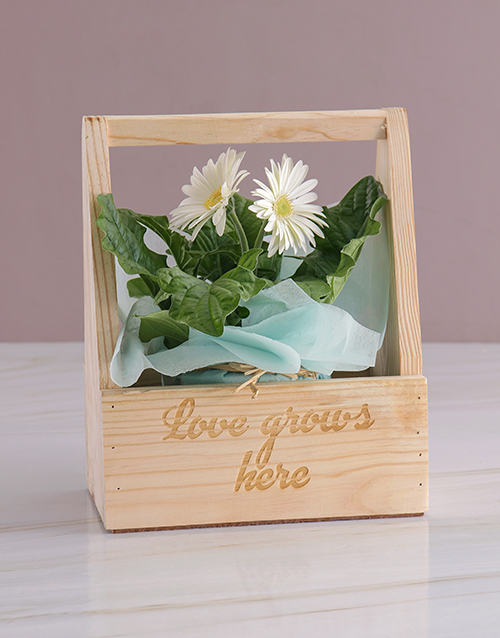 baby: Let Love Grow Gerbera Plant Gift!
