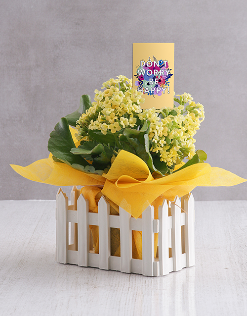 spring-day: Be Happy Kalanchoe Gift!