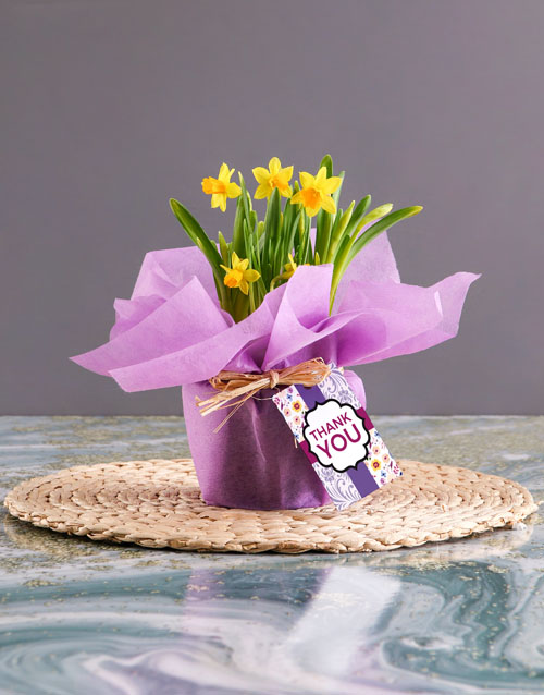 get-well: Thank You Yellow Daffodils In Lilac Wrapping!