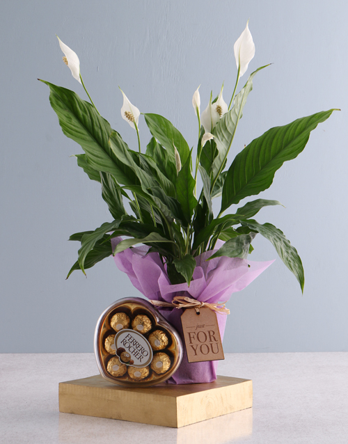 flowers: For You Spathiphyllum and Ferrero Rocher!