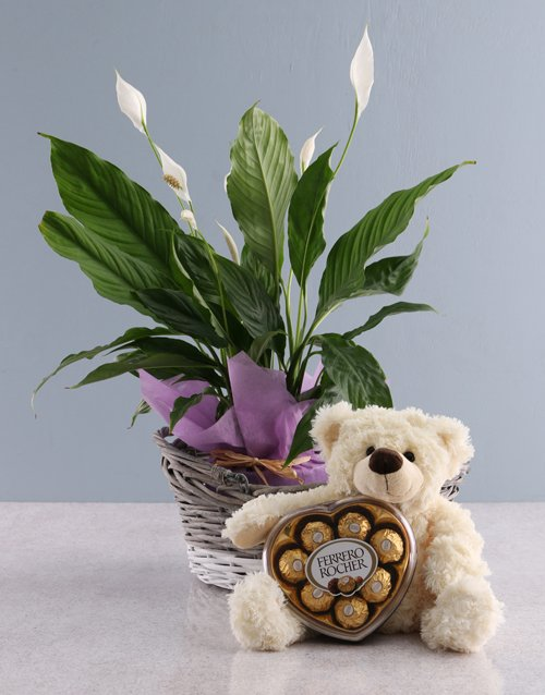 bosses-day: Spathiphyllum Chocolate Teddy Basket!