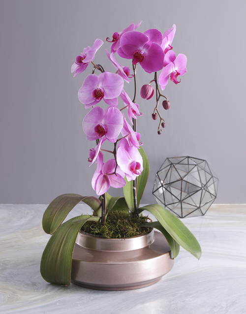 colour: Two Stemmed Orchid In A Rose Gold Planter!