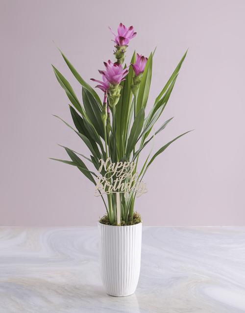 colour: Purple Curcuma in Tall Ceramic Vase!