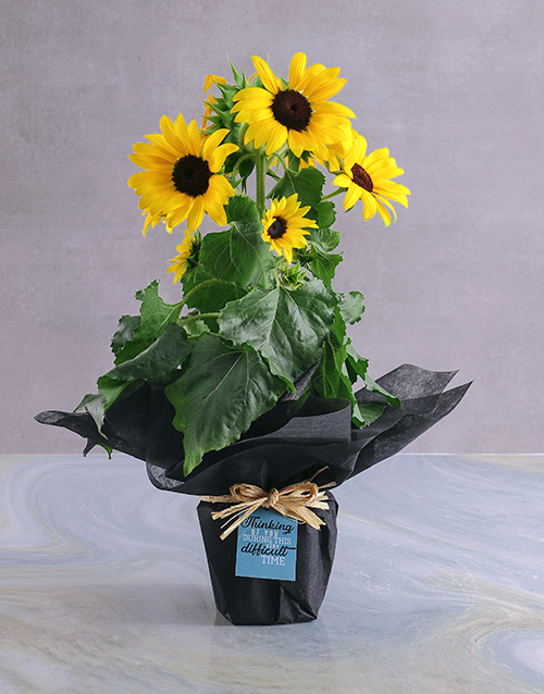 plants: Thinking Of You Sunflower Pot!