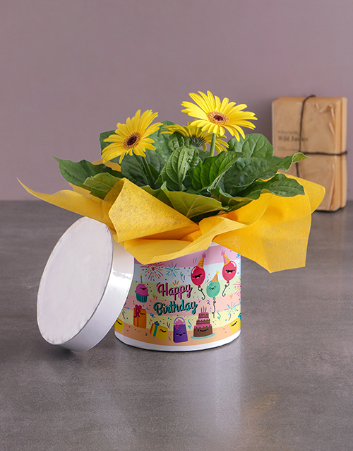 colour: Happy Birthday Gerbera Hatbox!