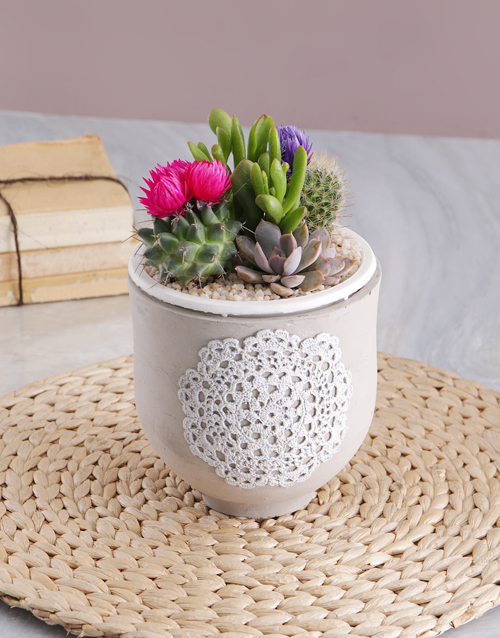 get-well: Succulent in Doily Pattern Pot!