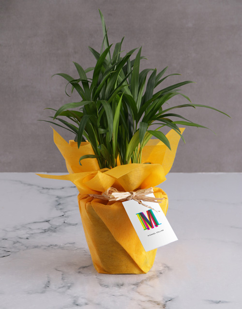 get-well: Personalised Cheerful Areca Bamboo!
