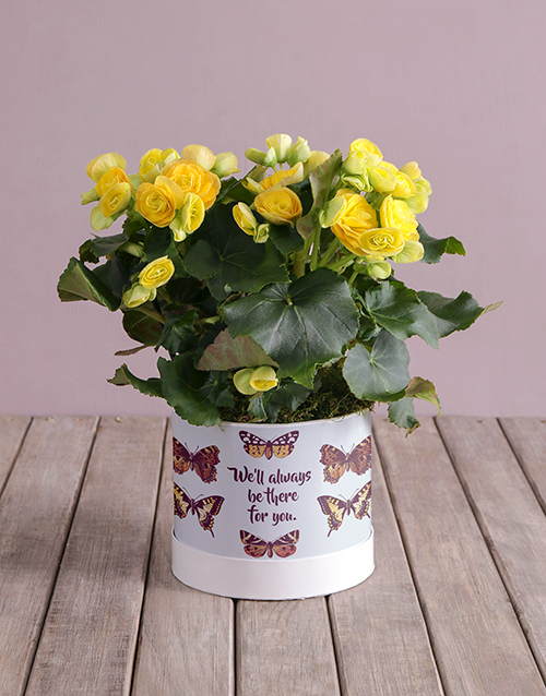 in-a-box: Always Be There Yellow Begonias!