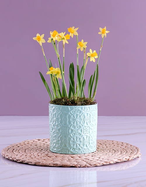 plants: Yellow Daffodil Plants In Mint Planter!