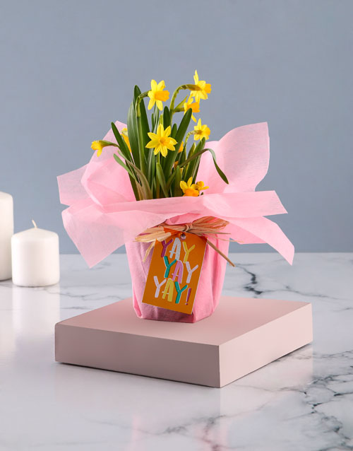 baby: Yay Daffodil Plant!