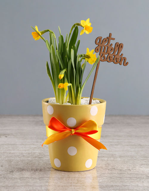 get-well: Get Well Daffodil Plant!
