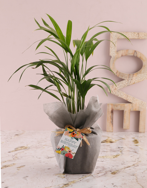apology: Areca Bamboo Birthday Planter!