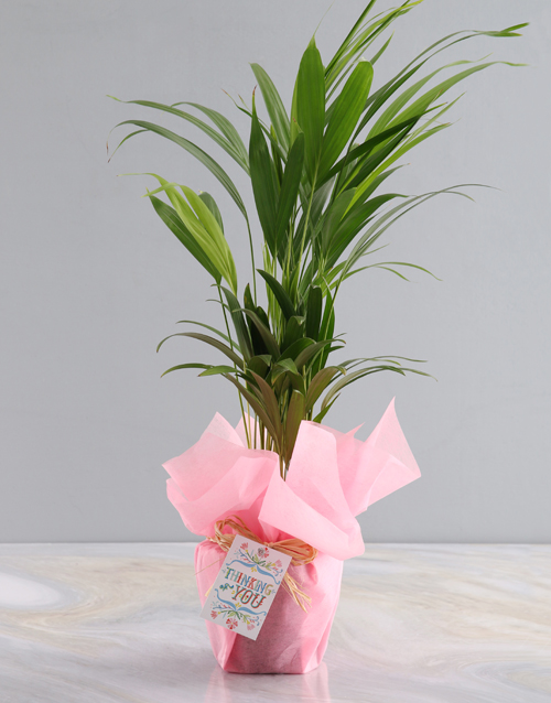 anniversary: Thoughts Of You Areca Bamboo Planter!