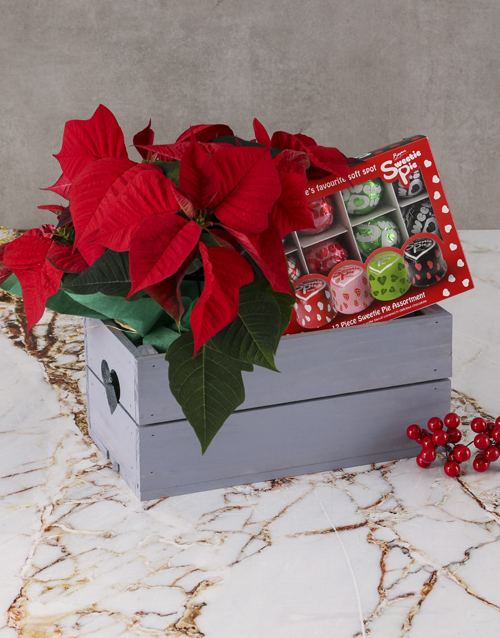 christmas: Sweetie Pie Poinsettia Hamper!