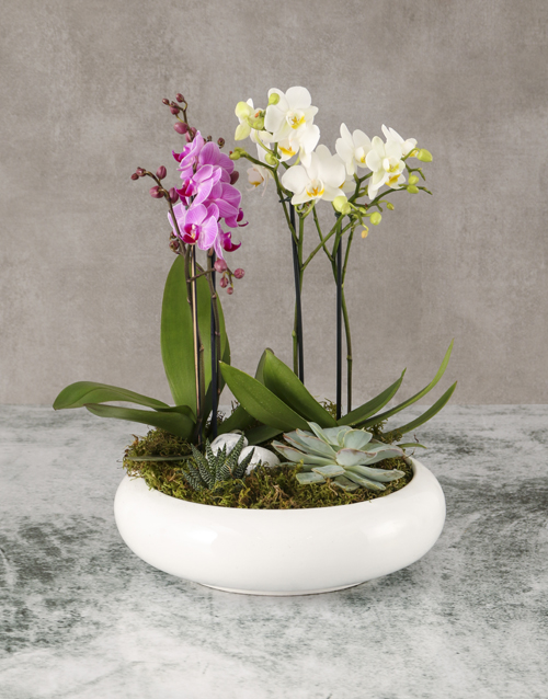 orchids: Garden Of Orchids And Succulents!