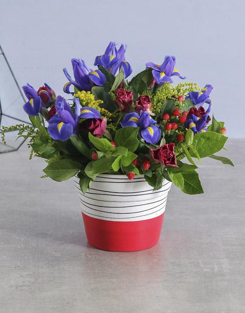 colour: Iris Mix in Red Stripe Pot!