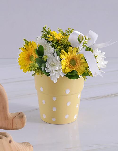 colour: Yellow Gerbera Blooms!
