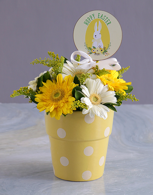 colour: Easter Sunshine Gerberas in Polka dot pot!