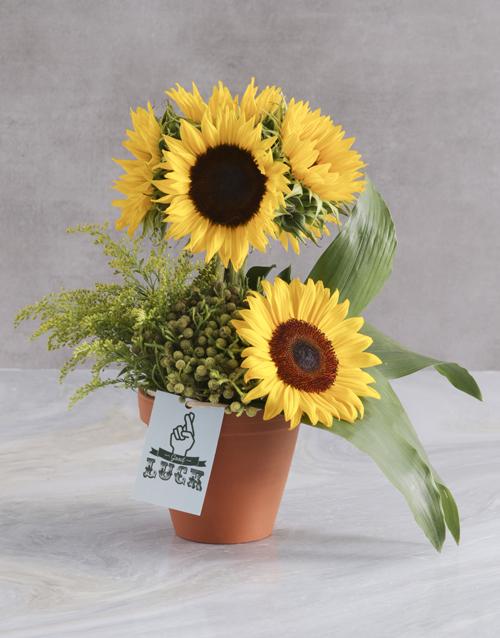 teachers-day: Good Luck Sunflower Lollipop Tree!