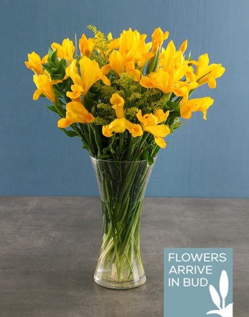 vase: Yellow Irises In Clear Vase!