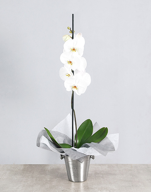 flowering: White Orchid Ice Bucket Gift!