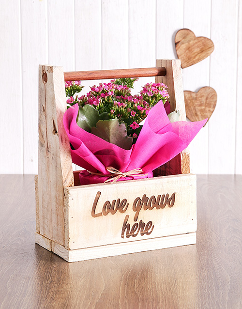 plants: Love Grows Here Kalanchoe Crate!