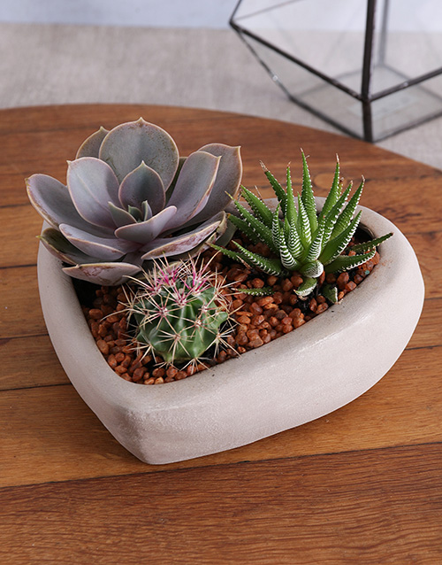 plants: Succulent in Cement Heart Vase!