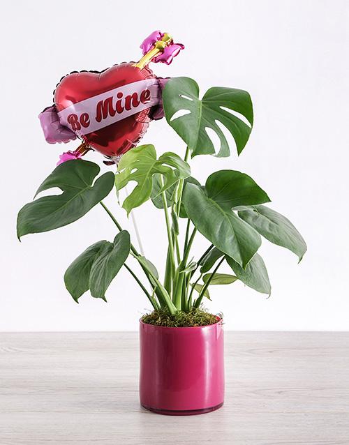 flowers: Be Mine Monsteria Plant!