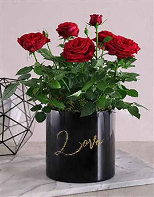 colour: Romantic Potted Rose Bush!