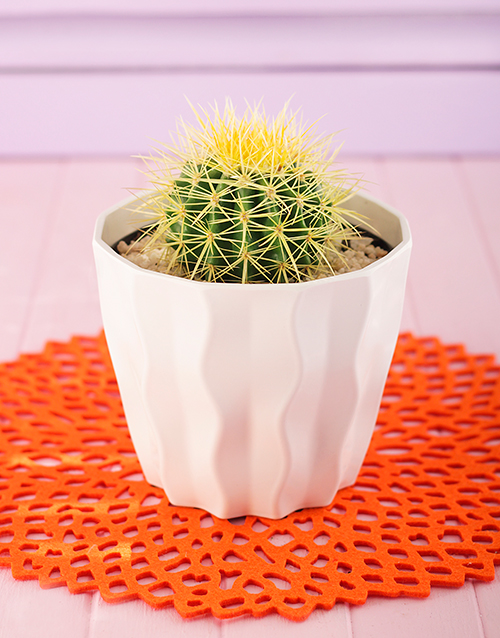 pottery: Single Cactus in a White Planter!